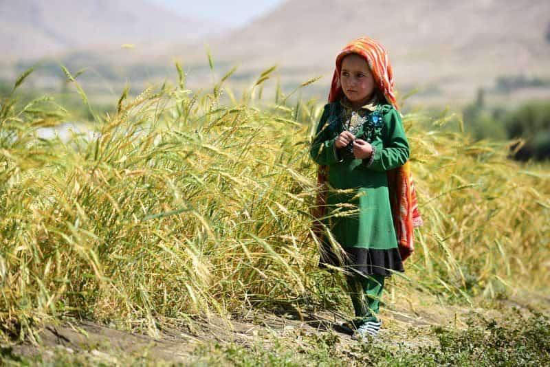 Lille pige i Afghanistans natur