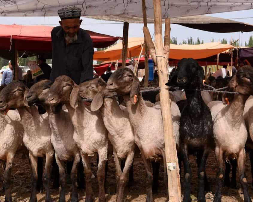 Geder i lokal landsby nær Silkevejen