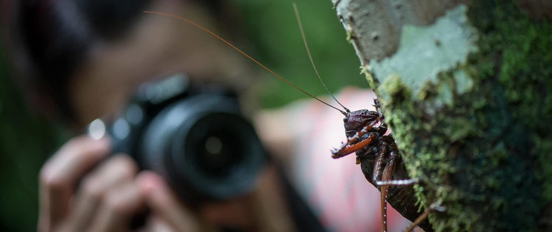 Græshoppe fotograferes af turist