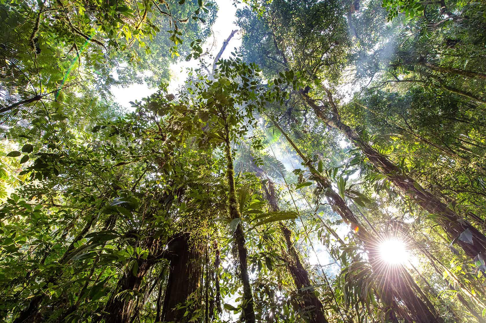 Oplyste trækroner i regnskoven