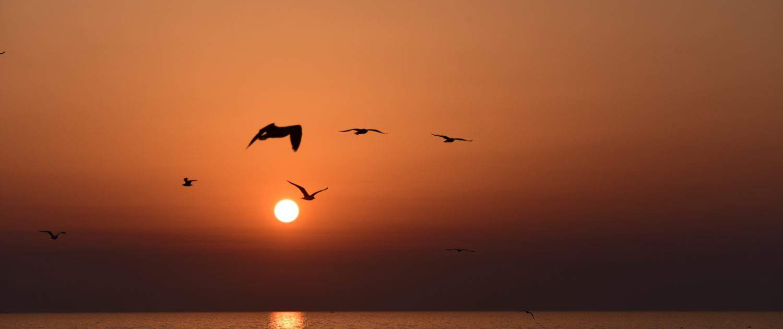 Solnedgang på rejser til den Persiske Golf