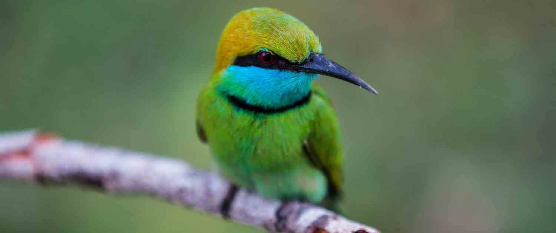 Fugl på gren på rejser til Sri Lanka