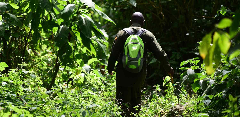 På vandring i Uganda og Rwanda
