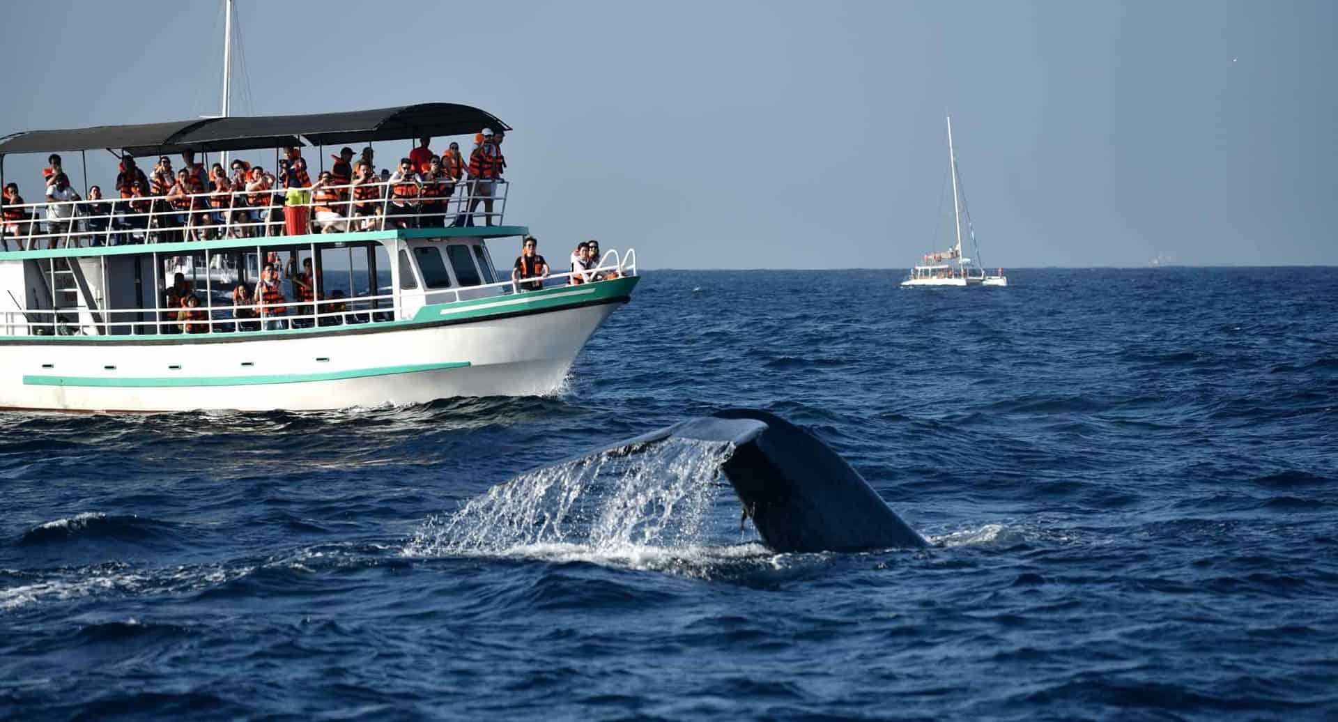 Sri Lanka hval safari