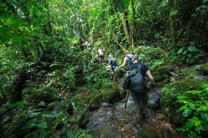 Vandring i Bigai i regnskoven