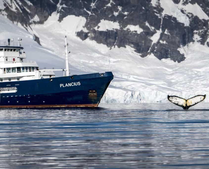 Krydstogtsskib Plancius