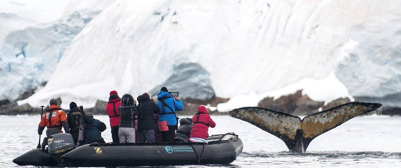 Ekspedition i det antarktiske ishav - på udkig efter pukkelhvaler