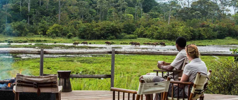 Turister ser på dyr i den congolanske natur
