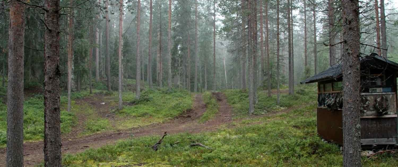 Skjulested i skoven på vildmarkssafari