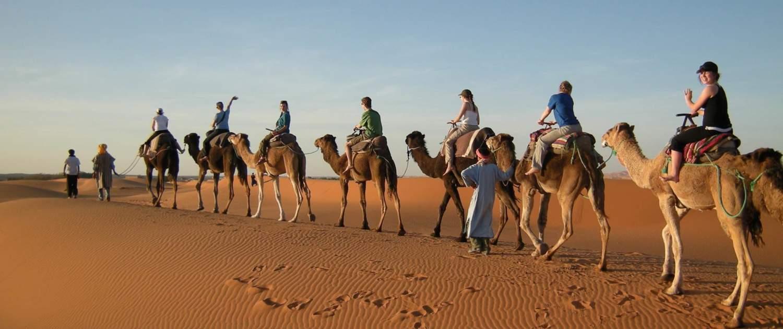 Turister på kamelryg i den marokkanske ørken