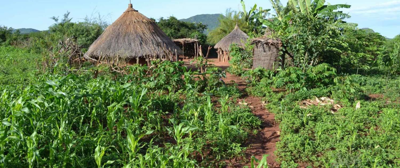 Hamerlandsby på rejser til Etiopien