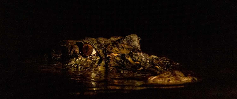 nattens_dyr_amazonas