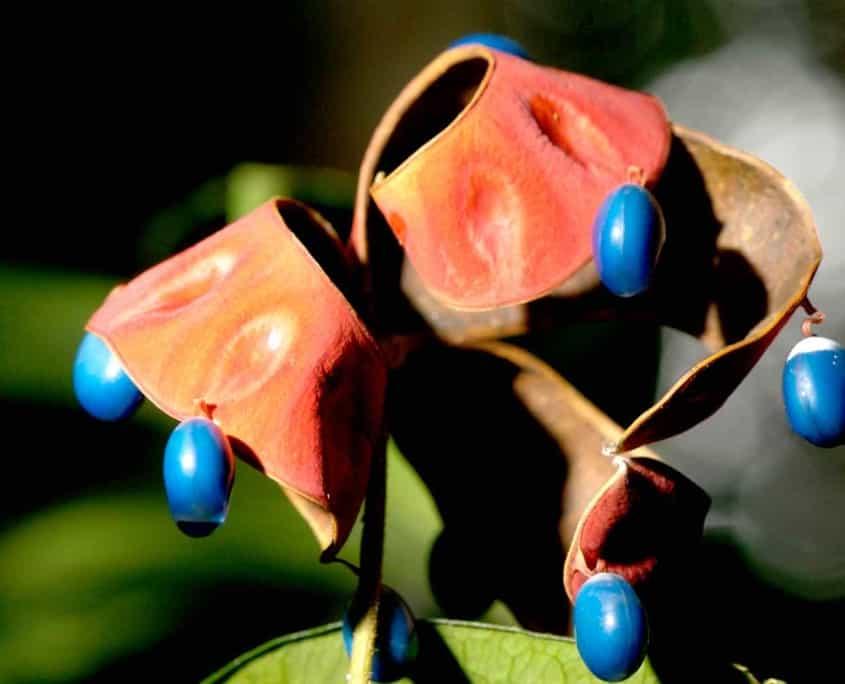 Eksotiske planter på rejser til amazonas