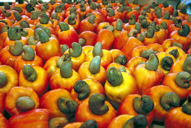 cashew_fruit_frugt
