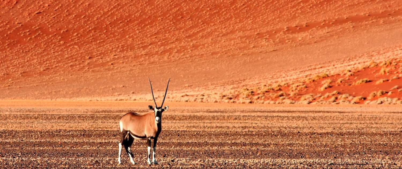 Dyr på sletten i Namibiaørkenen