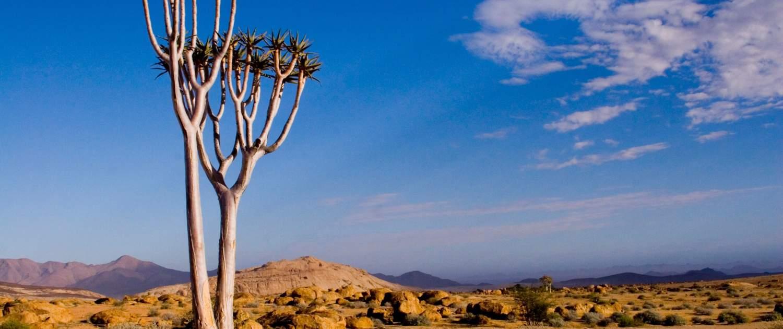 Ørkenbeplantning i Namibia