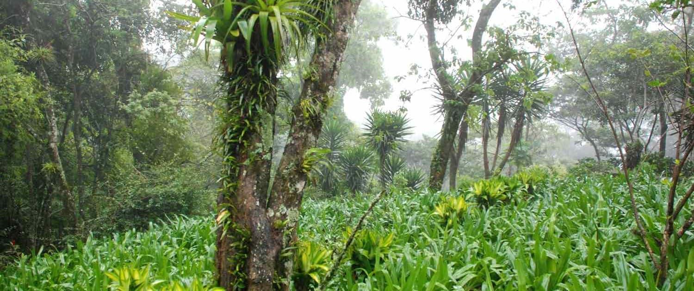 Monteverde-tågeregnskov