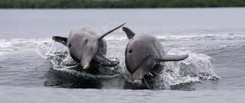 Delfiner i vandet