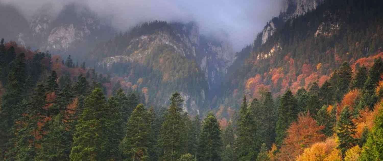 zarnesti skovområde i Rumænien