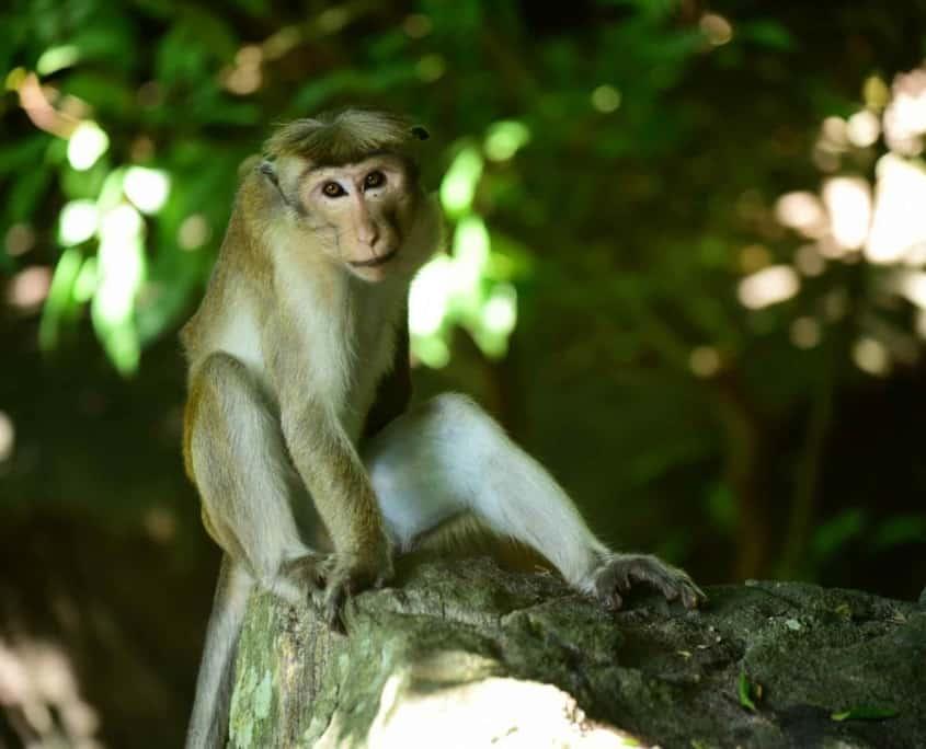 Monkey camp Sri Lanka