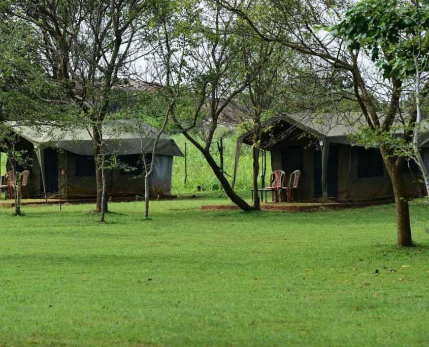 Sri Lanka big game safari