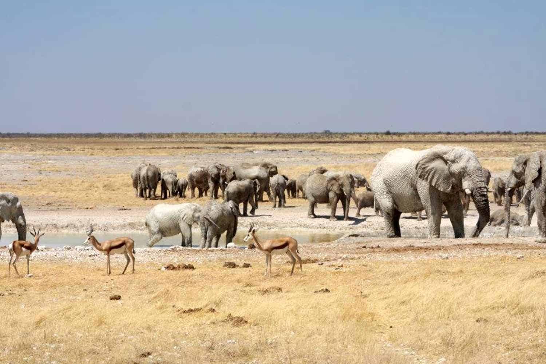 Etosha - safari