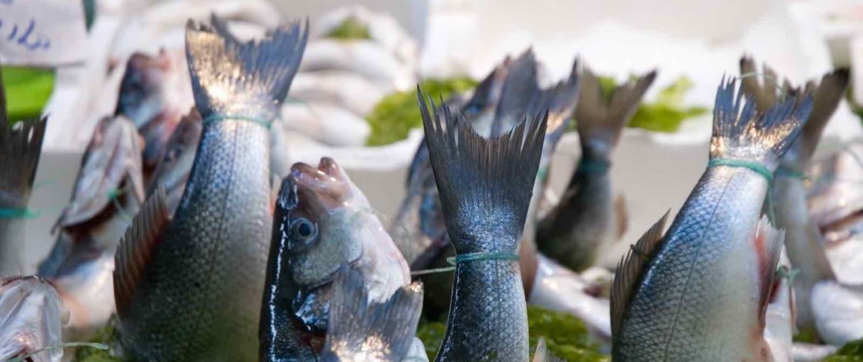 Italien - Napoli - Fiskemarkedet i Pignasecca
