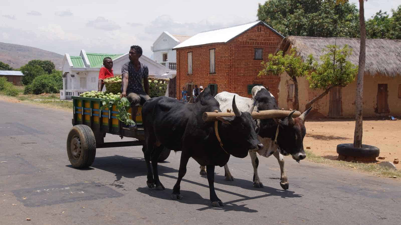 Rejser til Madagascar